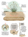 Carbon sequestration in soils - Mother Jones.png